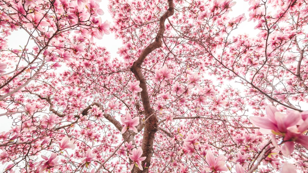 https://treemasterstreeservice.com/wp-content/uploads/2020/06/andy-feliciotti-R3Te-48geZM-unsplash-1-1280x720.jpg