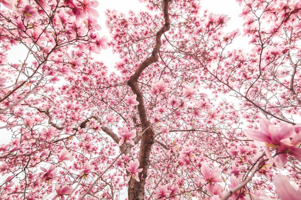 https://treemasterstreeservice.com/wp-content/uploads/2020/06/andy-feliciotti-R3Te-48geZM-unsplash-1-1280x853.jpg