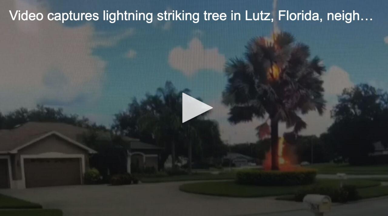 https://treemasterstreeservice.com/wp-content/uploads/2020/08/lightning-strikes-tree-in-lutz-fl-1280x715.jpg