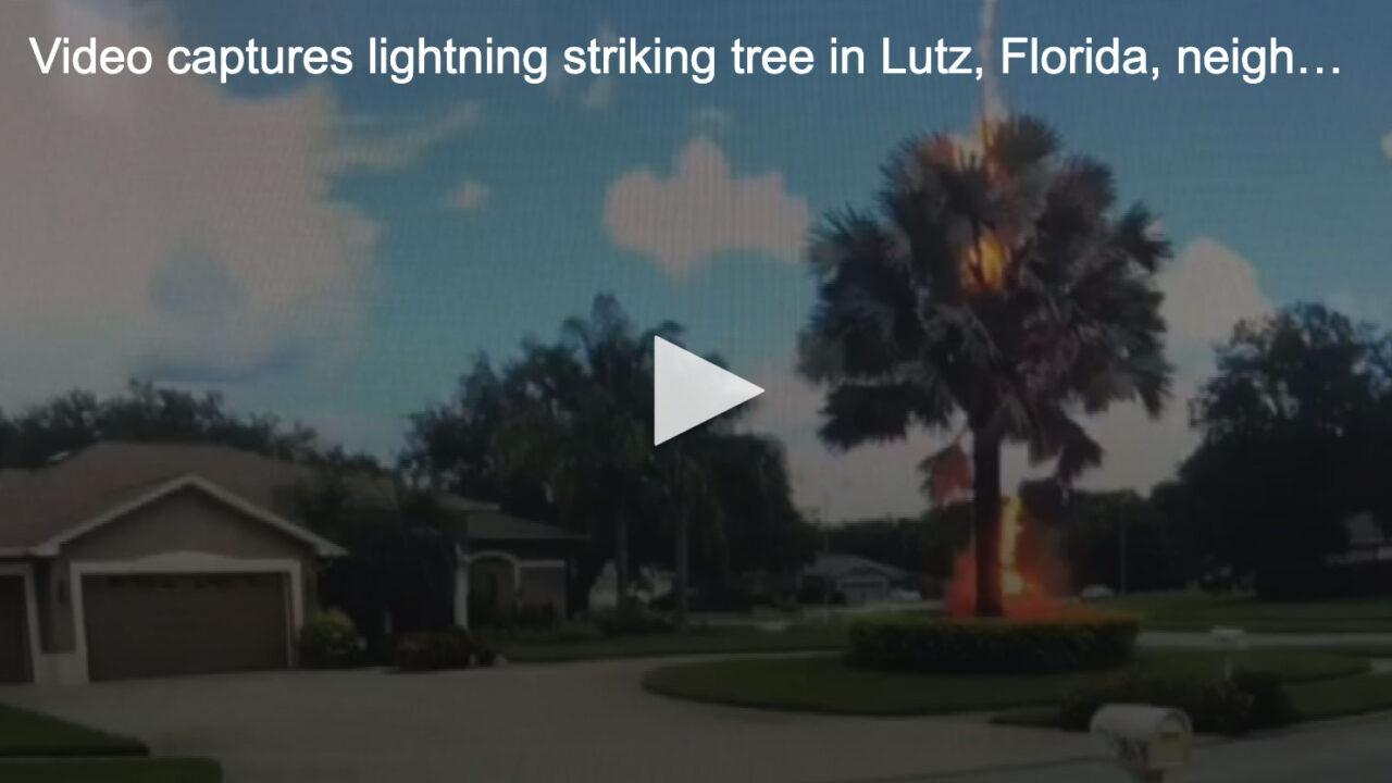 https://treemasterstreeservice.com/wp-content/uploads/2020/08/lightning-strikes-tree-in-lutz-fl-1280x720.jpg
