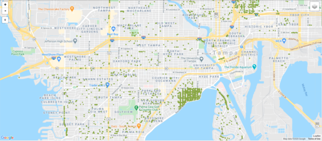 Tampa Tree MAp