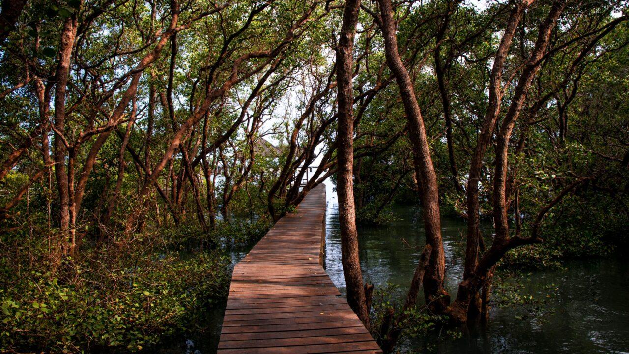 https://treemasterstreeservice.com/wp-content/uploads/2020/11/tree-service-for-mangroves-1280x720.jpg