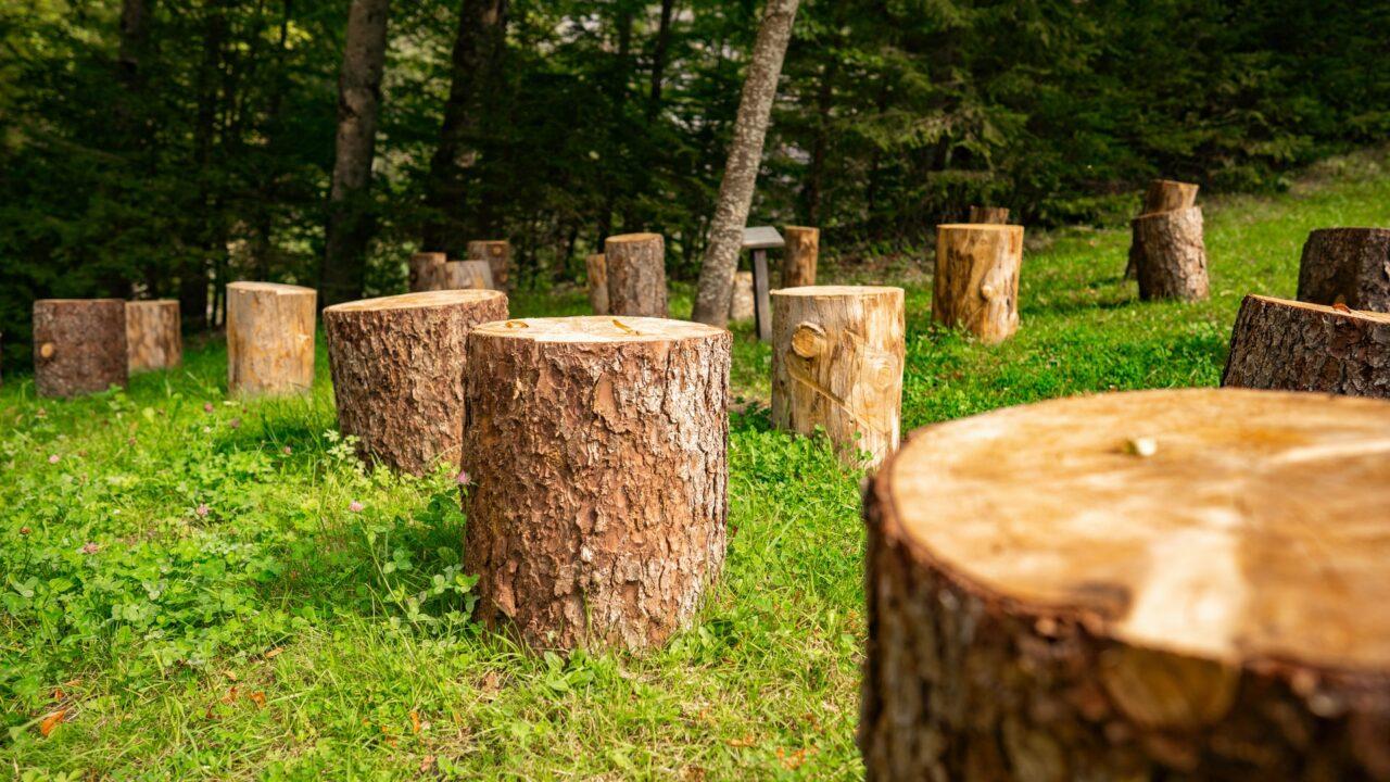 https://treemasterstreeservice.com/wp-content/uploads/2020/12/tree-removal-tree-stumps-1280x720.jpg
